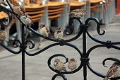 City Curious Sparrows
