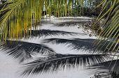 Palm Tree Shadows On Sand
