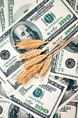 money with wheat ears