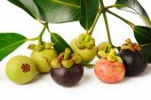 Ripe And Young Mangosteen  On White