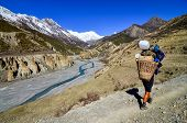 stock photo of sherpa  - Mountain porter carrying heavy load in Himalayas Nepal - JPG
