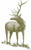 stock photo of deer rack  - Woodcut - JPG