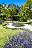 garden in Les Baux de-Provence, Provence, France