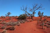 Lonely footpath through the typical red sand desert of Central Australia