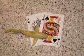 Card Shark Black Jack hand