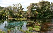 NZ Springs