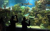 people shooting shark in oceanarium