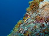 Nudibranch on Coral Reef