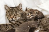 Cats Babies Cuddle With Mother