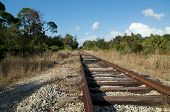 Railroad Tracks In Wilderness