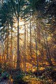 Sun light rays through autumn trees