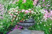 Beautiful Flower Bed In Vase