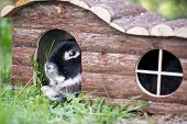 foto of rabbit hutch  - Black bunny rabbit lying on summer grass in a wooden pet hutch - JPG