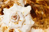 stock photo of cockle shell  - Marine sea shell closeup background - JPG
