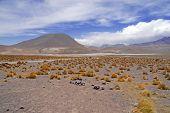 Barren Volcanic Landscape of Atacama Desert, Chile