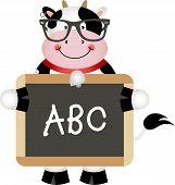 Funny Cow Teacher