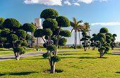 Battery Park (parque La Bateria), Torremolinos. Spain