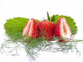 Strawberry With Leaves And A Sprig Of Dill