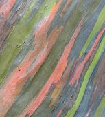 Abstract Tree Bark