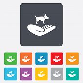 Shelter pets sign icon. Hand holds dog symbol.