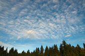 Forest, Blue Sky And Clouds