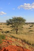 pic of grassland  - Landscape of desert and grassland with a tree - JPG