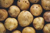 Fresh potato tubers closeup. Low-key lighting