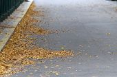 Autumn Road Scape
