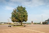 Tree on the city square
