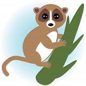 lemur on green branch on white background. vector
