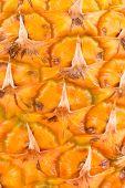 Pineapple fruit close-up