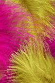 Colorful feather, close-up