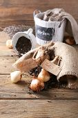 Flower bulbs with soil on sackcloth napkin and pots on wooden floor on wooden wall background