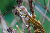 image of lizard skin  - Green Lizard changing skin resting on wood horizontal - JPG