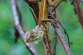stock photo of lizard skin  - Green Lizard changing skin resting on wood horizontal - JPG