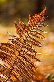 Autumn yellow fern
