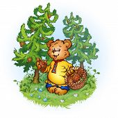 Illustration of bruin bear with pine cones