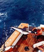 marlin fishing in cabo