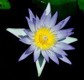 Calm Meditation Natural Elegance
