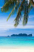 Palms Overhanging Coconut Getaway