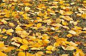 Rotten Leaves.