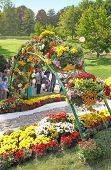 Kiev, Ukraine - September29: Chrysanthemumsr Show Landscape Park In Kiev