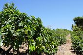 picture of economy  - Coffee production is a major part of Costa Rica - JPG