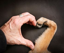 picture of claw  - a person and a dog making a heart shape with the hand and paw - JPG