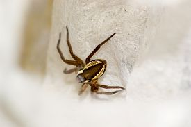 picture of terrestrial animal  - spider pets animals arachnid isolated animal brown - JPG