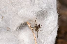 pic of terrestrial animal  - spider pets animals arachnid isolated animal brown - JPG