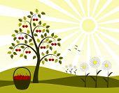 Cherry Tree And Daisies