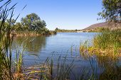 picture of wetland  - Patagonia Lake State Park and wetlands area in Arizona - JPG