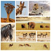 Safari in Afrika collage