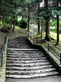Forest Stairway